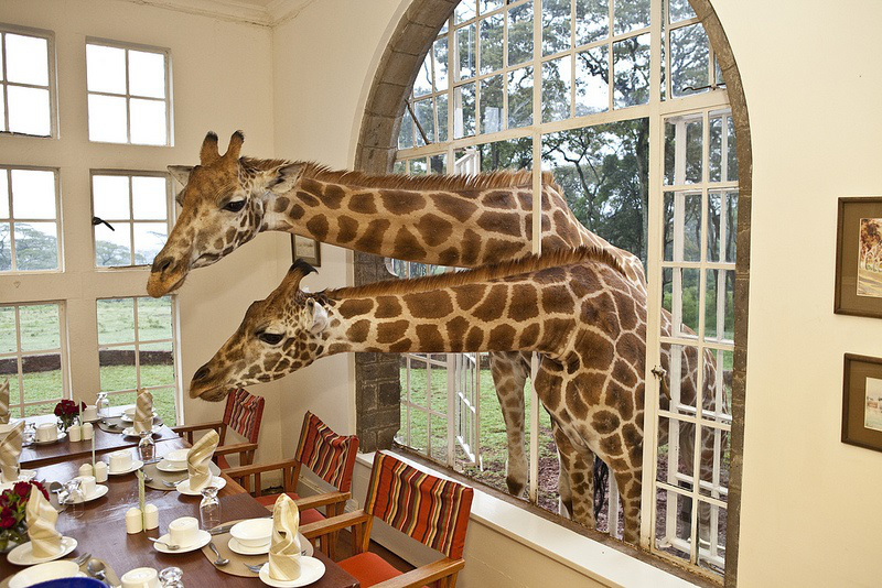 ©  Giraffe Manor / The Safari Collection