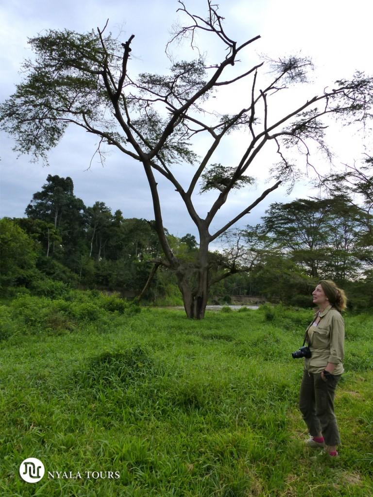Río Ntungwe. Ntungwe river. Ishasha Wilderness Camp. Ishasha, Queen Elizabeth