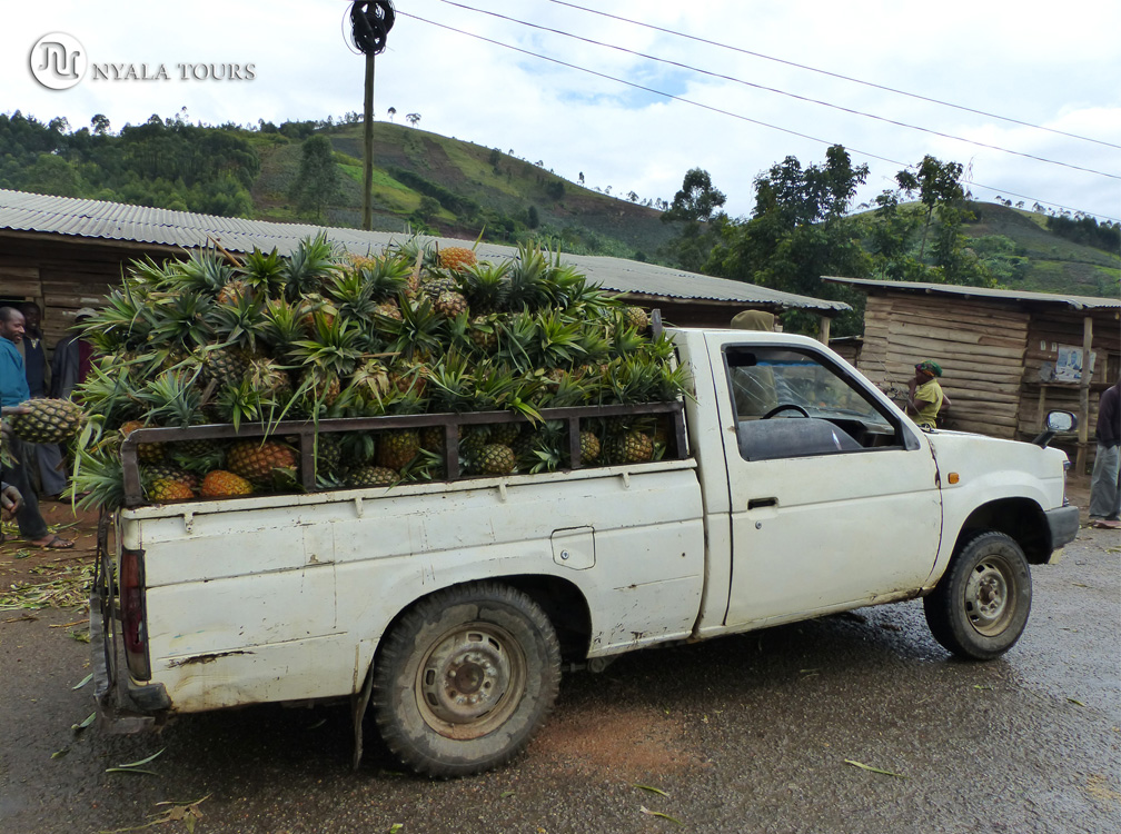 Camioneta llena de piñas en el mercado, por el camino a Kampala.   Pick-up full of pineapples in market, on the way to Kampala.