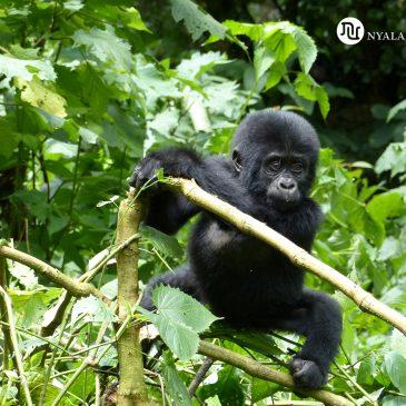 Viajes a Uganda ¡Espectacular!