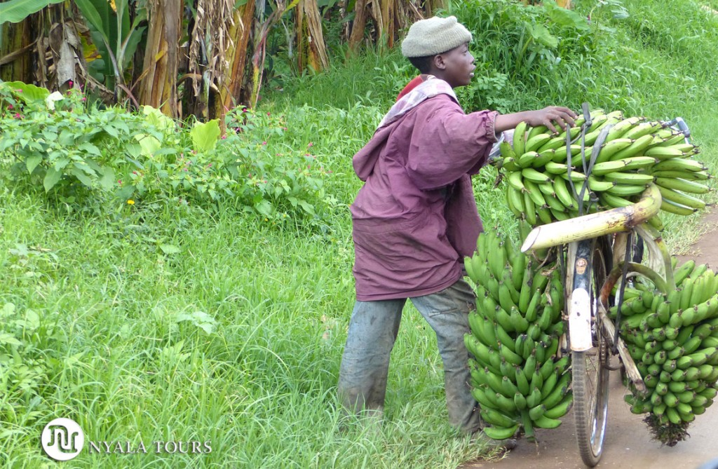boy-carrying-bananas-on-bicycle-Kasenda-Crater-Lakes-area