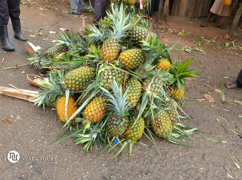 Manojo de piñas en el mercado, por el camino a Kampala.   Bunch of pineapple in the market, on the way to Kampala.