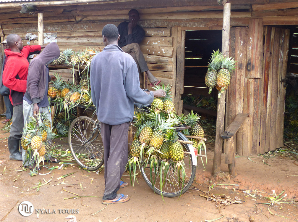 Mercado de piñas, por el camino a Kampala.   Pineapple market, on the way to Kampala.
