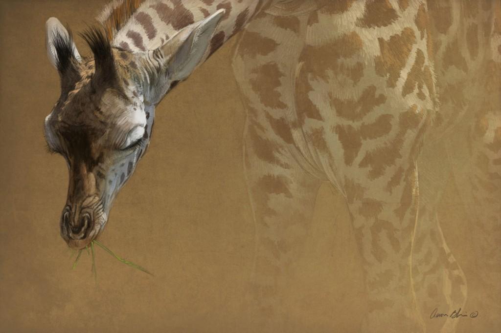 Baby+Giraffe+3