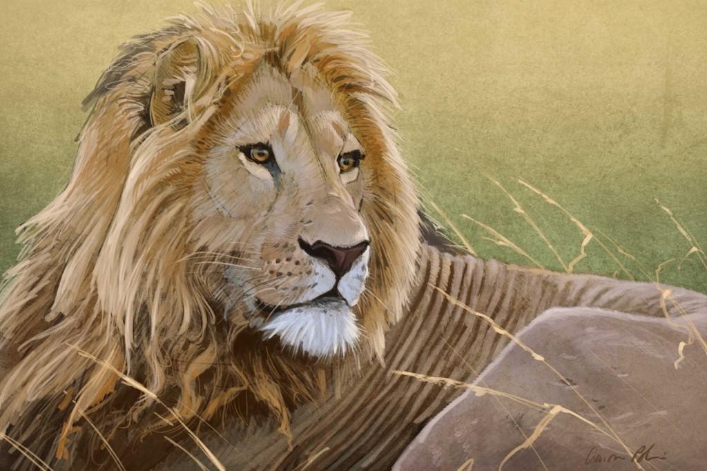 Lion comp 3a