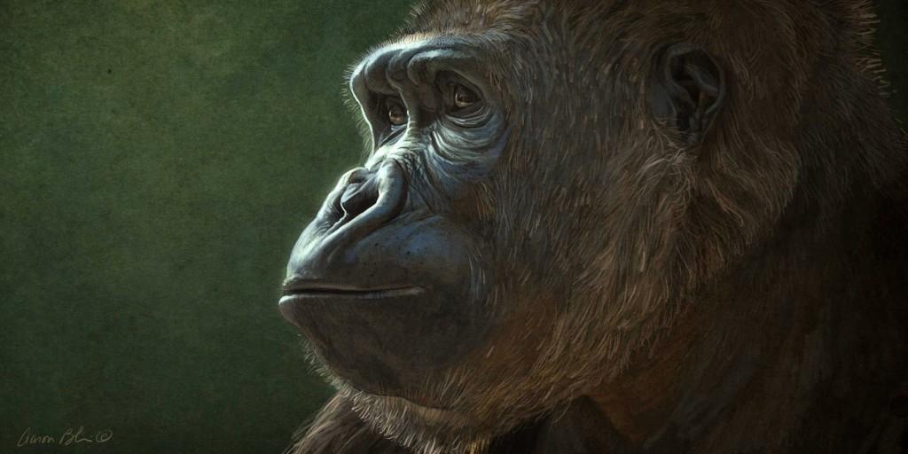 Chimpanceé Chimpanzee