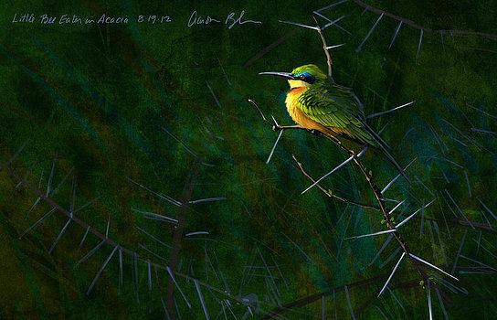 Abejoruco  Little Bee Eater