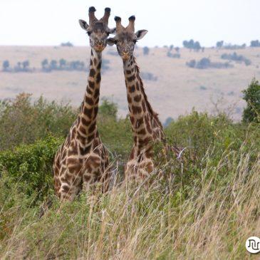 Viaje de novios a Kenia y Zanzibar |  Honeymoon to Kenya and Zanzibar