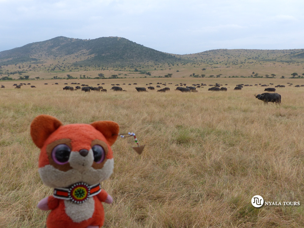 Ruby con los búfalos.   Ruby with the buffalos.
