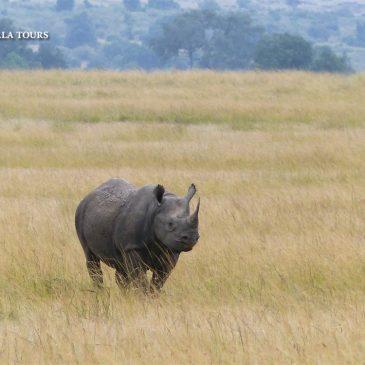 Día Mundial del Rinoceronte  |   World Rhino Day