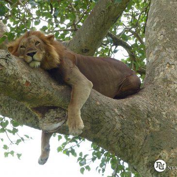Viaje a Uganda |  Trip to Uganda