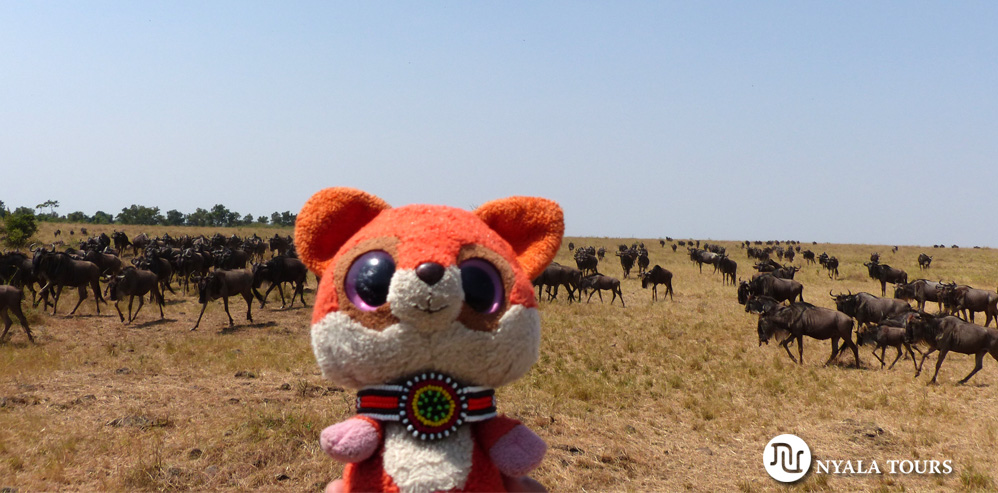Ruby con los ñus.  Ruby with the wildebeests