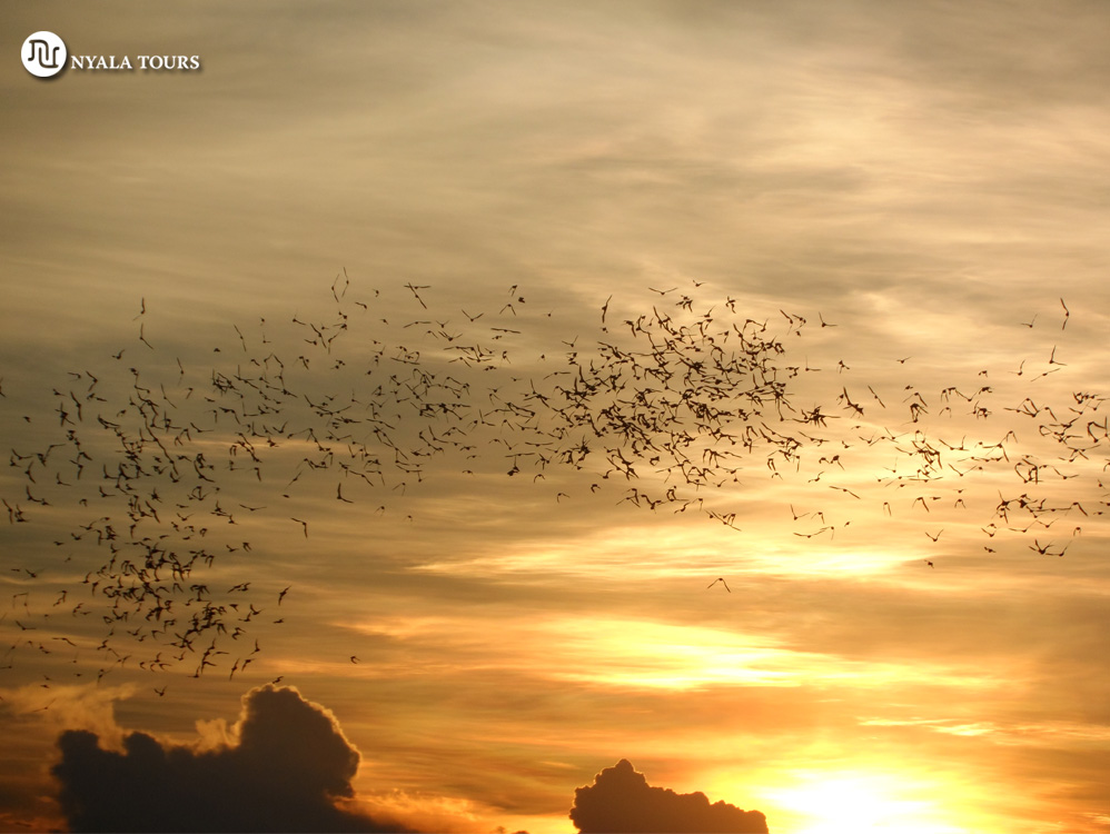 bats-sunset-khao-yai