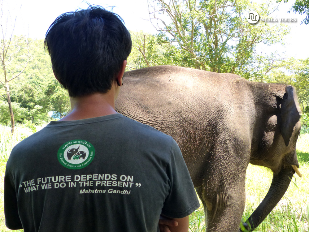 elephant-and-quote