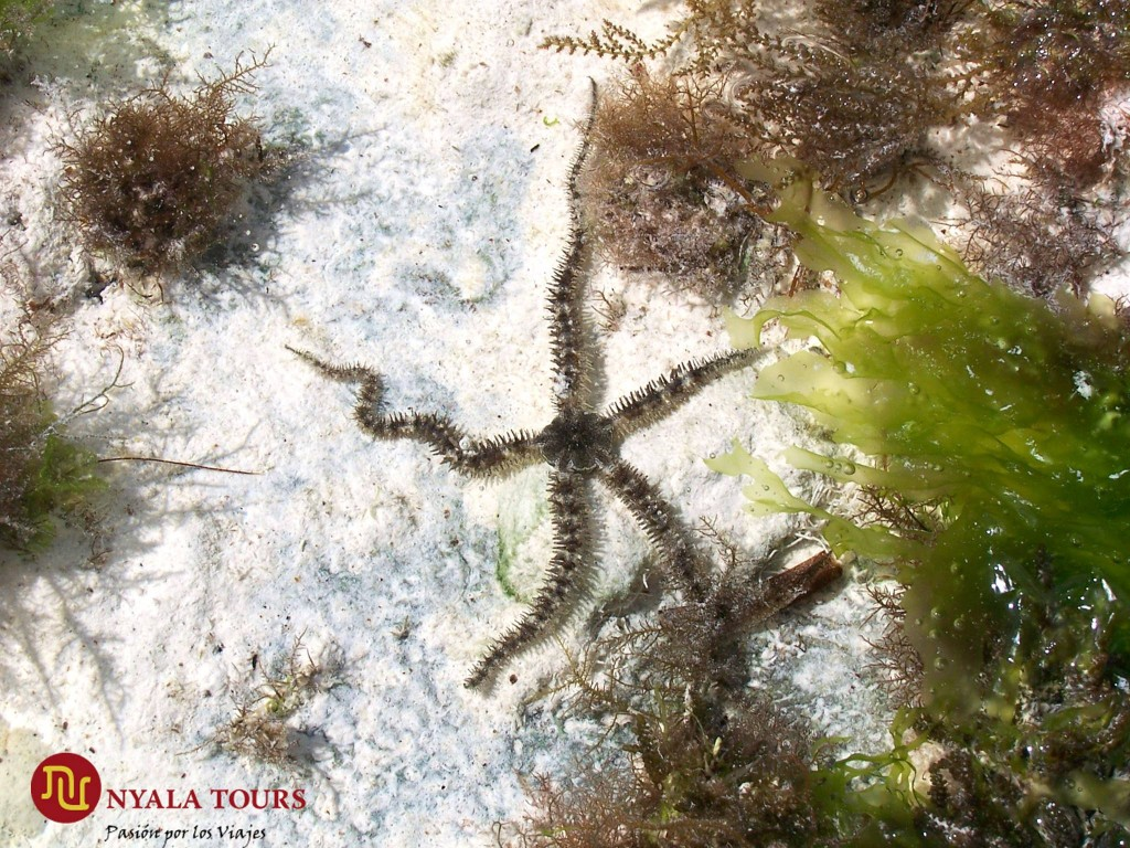 Estrella de mar / Star fish