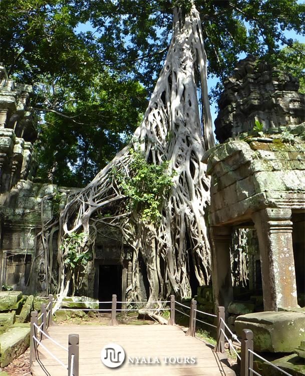 tree-siemreap-angkor-camodia1