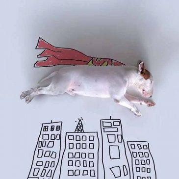 Ilustrataciones con un bull terrier | Illustrations with a bull terrier