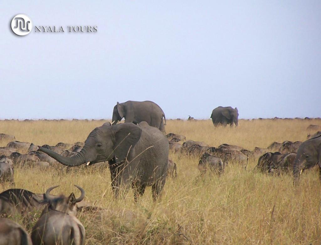 elefante-joven-oliendo-los-nus-signature
