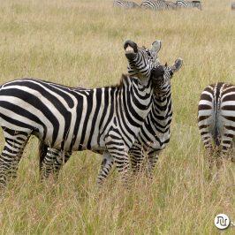Viaje a Kenia con Zanzibar     Trip to Kenya with Zanzibar