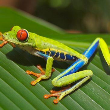Guía de Costa Rica    Guide to Costa Rica