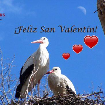 TARJETAS DE REGALO SAN VALENTÍN  |   VALENTINE´S DAY GIFT CARDS