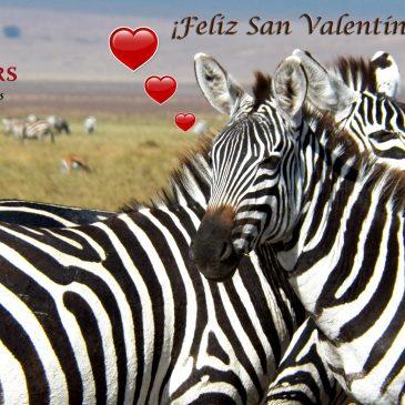 TARJETAS Y GIFS DE REGALO SAN VALENTÍN CEBRAS  |   VALENTINE´S DAY GIFT CARDS AND GIFTS ZEBRAS