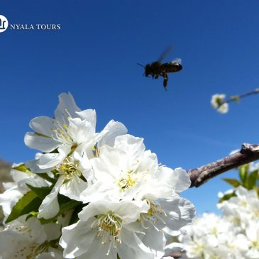 Primavera en Flor | Spring in Blossom