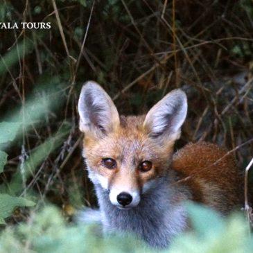 DÍA MUNDIAL DE LOS ANIMALES  –  WORLD ANIMAL DAY