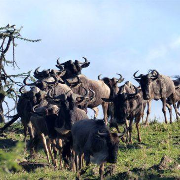 Testimonios – Safari a Kenia