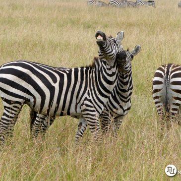 Viaje de Novios a Sudáfrica, Kenia y Seychelles