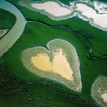 HEARTS | CORAZONES