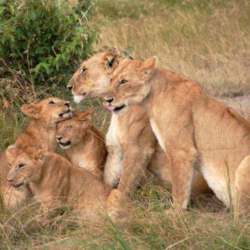 Viaje privado a Kenia y Tanzania