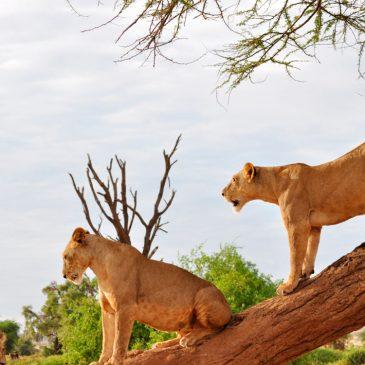 Viaje de novios a Kenia y Mauricio – Recomendaciones