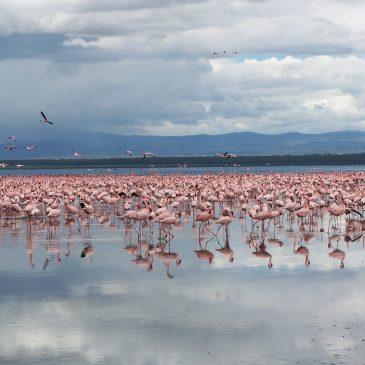 Viaje a Kenia y Zanzibar en familia