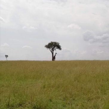 Viaje de novios a Kenia y Maldivas