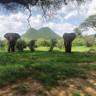 Viaje de incentivos a Kenia